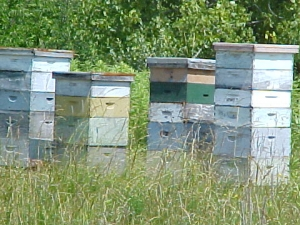 Bee hives in a field in Cattaraugus County