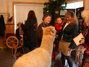 Tony the Alpaca welcoming guests