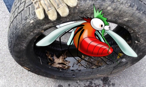 Engorged cartoon mosquito on a tire