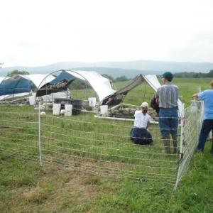 Raising chickens in the fields of Cattaraugus County