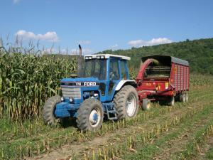 Chopping corn into silage wagon