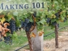 Growing Grapes & Wine Making 101 a Free Educational Opportunity