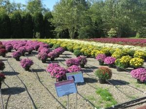 Flowers at Pleasant Valley Greenhouse & Nursery