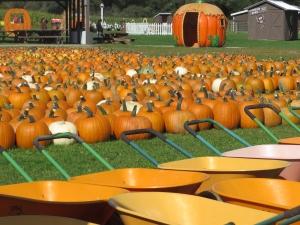 Pumpkins, pumpkincarts, pavilion, magic pumpkin and more at Pumpkinville in Great Valley, NY