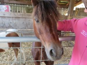 Horse and Sue LaBuhn