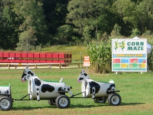 Cow train and Corn Maze at Pumpkinville