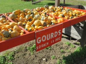 Gourds, gourds, gourds at Pumpkinville