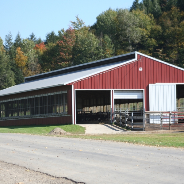 the calf and yearling barn on Teelak farms