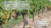 Growing Grapes & Wine Making 101 a Free Educational Opportunity on May 12, 2016