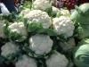 Salamanca Farmer's Market